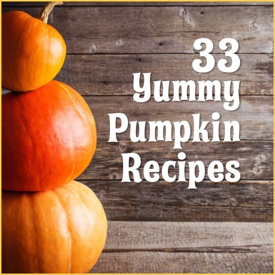 Love pumpkin? Then you'll love these recipes both sweet and savory!