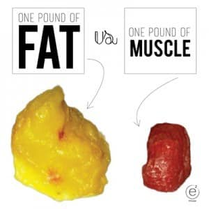 a pound of muscle vs. a pound of fat