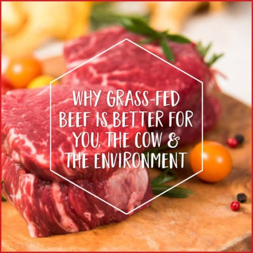 Does grass-fed beef really make that much of a difference? Find out here!
