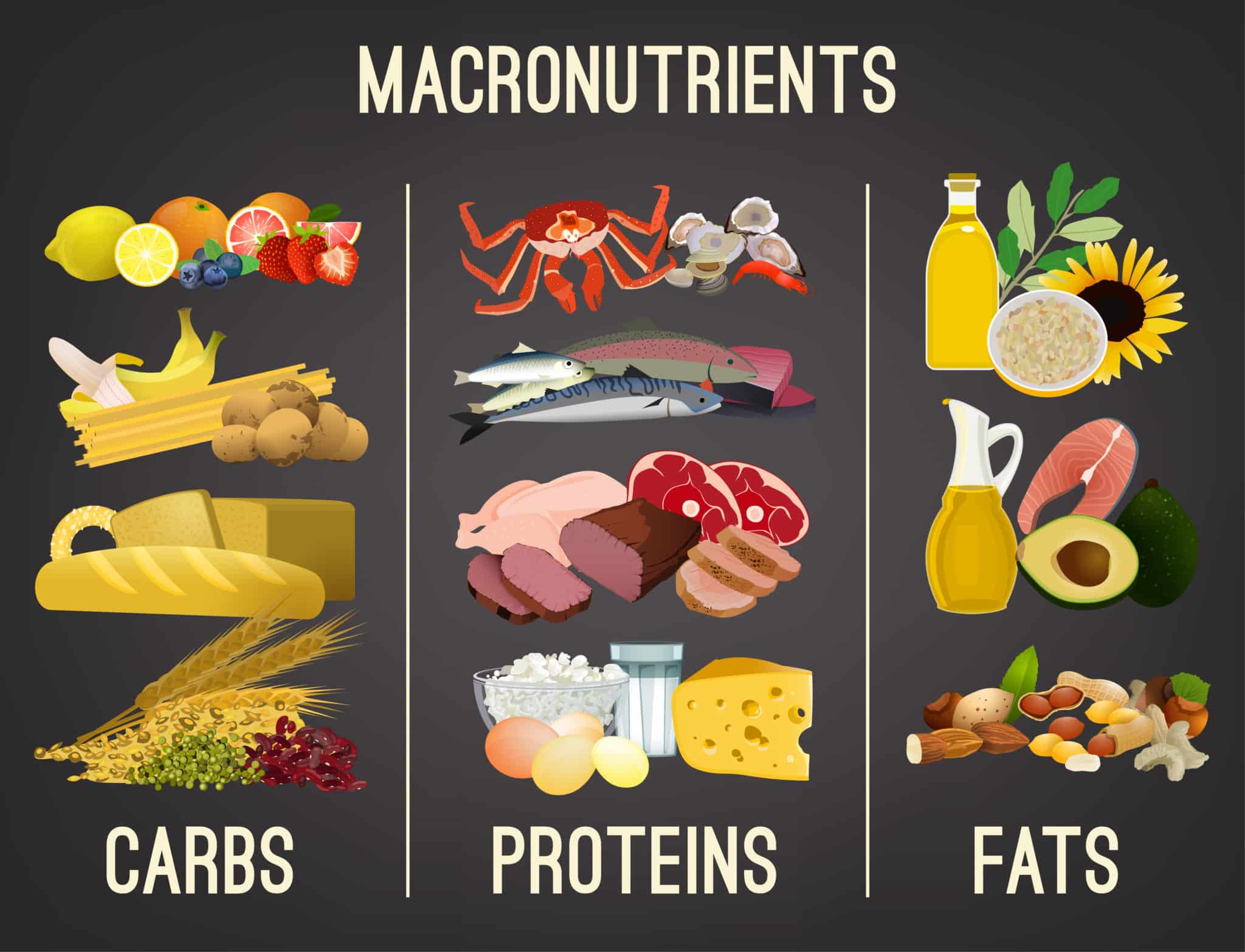Graphic of macronutrients with images of carbs, proteins and fats